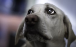 Un grupo de veterinarios comentó por que no hay que dejar solas a nuestras mascotas el día que mueran.