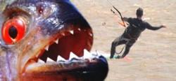 Un joven que practicaba Kitesurf fue atacado por voraces palometas en el Río Paraná.