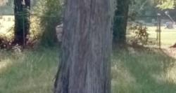 Un rostro de una pequeña niña asoma tras el árbol.(Google Street View)