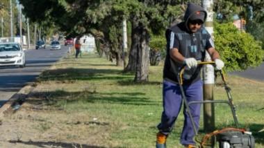 Césped. Uno de los agentes municipales emprolijando un espacio verde en la capital chubutense.