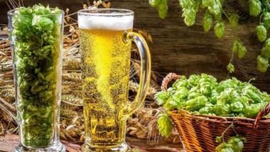 Conjuntamente con el agua, la malta y la levadura, el lúpulo es uno de los 4 elementos principales que intervienen en la elaboración de la cerveza.