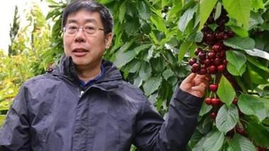 Chequeo. Uno de los técnicos chinos que llegó hasta el sur chubutense para verificar la calidad de la fruta.