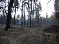 El fuego arrasó masa boscosa pero no hubo víctimas (foto Jorge Posse)
