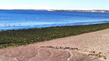 Paisaje. Una postal de las algas cuyo tratamiento quieren mejorar.