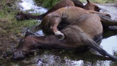 Los tres caballos murieron en contados minutos al ser alcanzados por la electricidad.