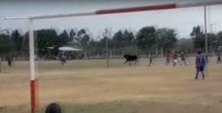En su furiosa corrida, el toro embistió a un espectador, que debió ser trasladado al hospital por los golpes recibidos en la cabeza.