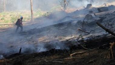 Brigadistas forestales y bomberos urbanos trabajaron en conjunto.