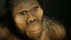 Todos los seres humanos provienen de un único lugar, cuya población habitó hace 200.000 años en una región ubicada al sur de África.