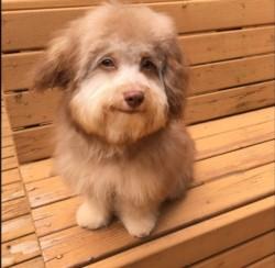 """Resultado de imagen para Furor en las redes por """"Nori"""", el perro con mirada de joven apuesto"""