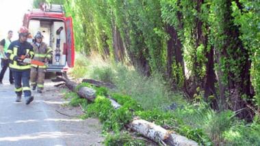 Así quedó un árbol en la avenida Murga de Trelew tras afectar un auto.