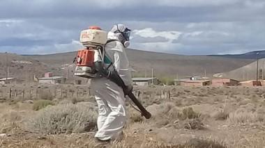Personal especializado trabaja en combatir las tucuras con el uso de insecticidas.