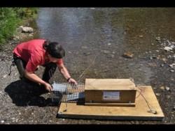 Desde que fueron activadas unas 86 trampas balsa en los cien kilómetros de extensión del río Las Vueltas, no se han producido capturas del visón americano.