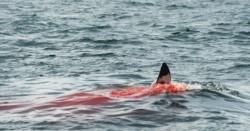 Un turista británico fue devorado por tiburones en la paradisíaca Isla Reunión, al este de Madagascar.