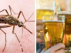 Un estudio dio nuevas pistas al respecto y la cerveza podría ser una de las causas de las picaduras.