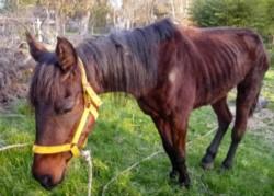 Un caballo proveniente de Entre Ríos fue diagnosticado con anemia equina infecciosa (AIE). (Archivo)