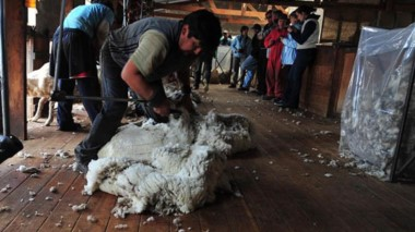 Se elevaría la renteción sobre la lana sucia, aunque sería una actualización tras el corrimiento del dólar.