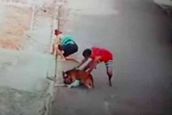 Patrick do Céu trata de sacar al peligroso perro del cuello del niño.