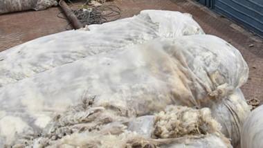 Los fardos de lana robados eran el trabajo anual. No hay detenidos.