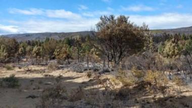 Daño. Especies nativas y pinos fueron devastadas en el incendio que comenzó hace cuatro días en Epuyén.