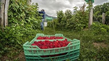 Símbolo. Las frutas finas también son parte de la idiosincracia de El Hoyo, que se prepara a full.