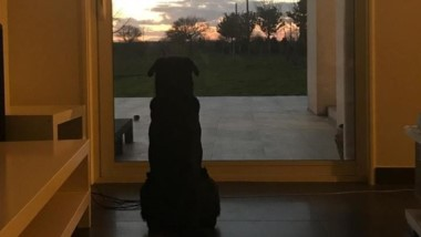 Ella es Nala, la perra que espera a que su dueño, Emiliano Sala, regrese a casa.