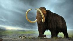 El proyecto, llevado a cabo en Japón por un equipo internacional, tomó células de un mamut bien conservado descubierto en 2011 en el permafrost siberiano.