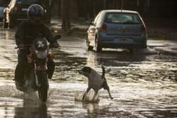 Un motociclista luchando contra el agua y un perro en Trelew. (Foto: Sergio Esparza / Jornada)