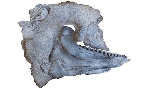 Vista lateral de la mandíbula y sus dientes del nuevo pez hallado.
