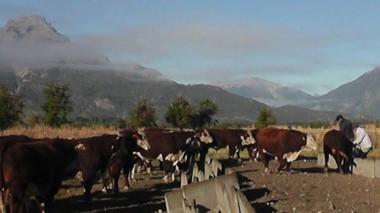 El establecimiento Los Murmullos, en Cholila, es reconocido por producir carne de excelencia.