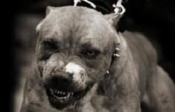 Los perros estaban tan agresivos que los paramédicos inicialmente no pudieron ir a donde estaba Villafane.