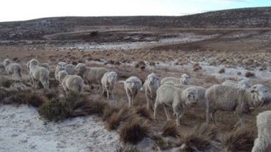 Ya se ha reunido el Comité de Sequía para evaluar la situación y los organismos técnicos definirán si de declara la emergencia agropecuaria.