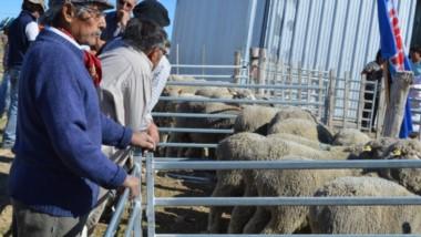 Está en vigencia la operatoria de créditos Crecer de Corfo para la compra de vientres reproductores.