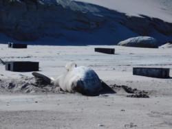 Basura en las playas. Las imágenes de Punta Delgada durante el fin de semana (fotos Facebook Christian Fernándes)