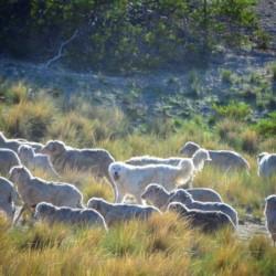 Los productores de Península Valdés desarrollan un producto sustentable (foto gentileza Ricardo Baldi)
