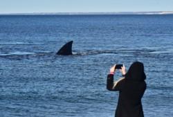 La temporada oficial para el avistaje de cetáceos comienza en junio y se extiende hasta diciembre. (Foto: Daniel Feldman)