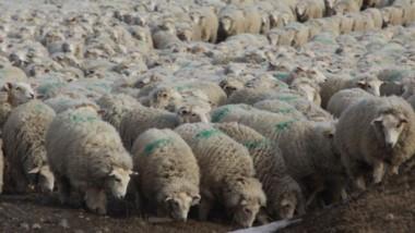 De no haber cambios, animales muertos y campos estériles serán parte del paisaje patagónico.