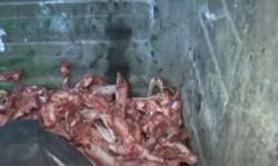 Los huesos de perros descarnados. Vecinos temen que se esté vendiendo su carne.