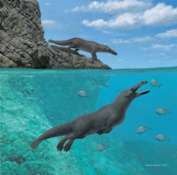 Los investigadores creen que este cetáceo, de unos cuatro metros de longitud, podía caminar y nadar al mismo tiempo.