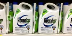 Monsanto sigue defendiendo que el Roundup no es nocivo.