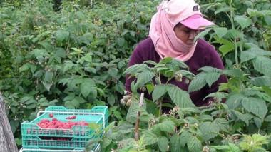 José Almirón reconoció que la mala temporada turística afectó al comercio y la producción de fruta fina.