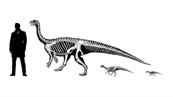 Dinosaurios: un estudio asegura que en Patagonia una especie evolucionó en el modo de andar