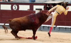 El torero francés Juan Leal, en momento de recibir el cornazo en el ano.