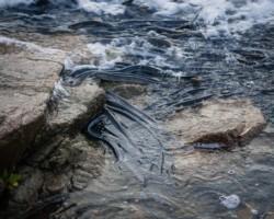Según los vecinos que estuvieron en el lugar se veían cientos de estos peces (foto Santiago González)