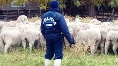 Los efectivos policiales continuarán su tarea durante esta semana.