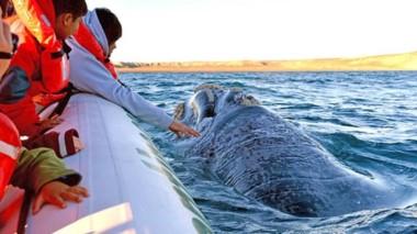 En Puerto Pirámides se lanzará la temporada con múltiples actividades los días 29 y 30 de junio.