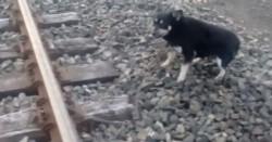 El perrito fue salvado de una muerte cruel por el bondadoso maquinista.