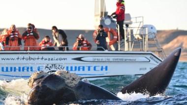 De junio a diciembre es la época más económica para visitar las ballenas en Península Valdés.