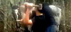 El pobre caballito a segundos de ser salvajemente asesinado a martillazos. (Captura de video)