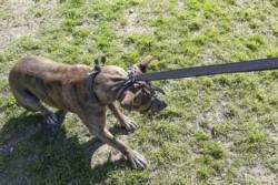 Uno de los pitbulls que mató al hombre fue retirado de la fábrica de aberturas.