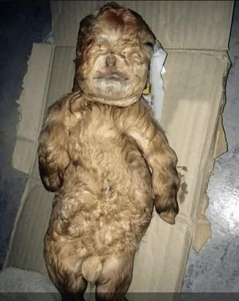 La criatura, en vez de estar en cuatro patas, está recostada como un pequeño recién nacido.
